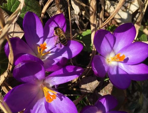 Frühling – Saisonbeginn 2018